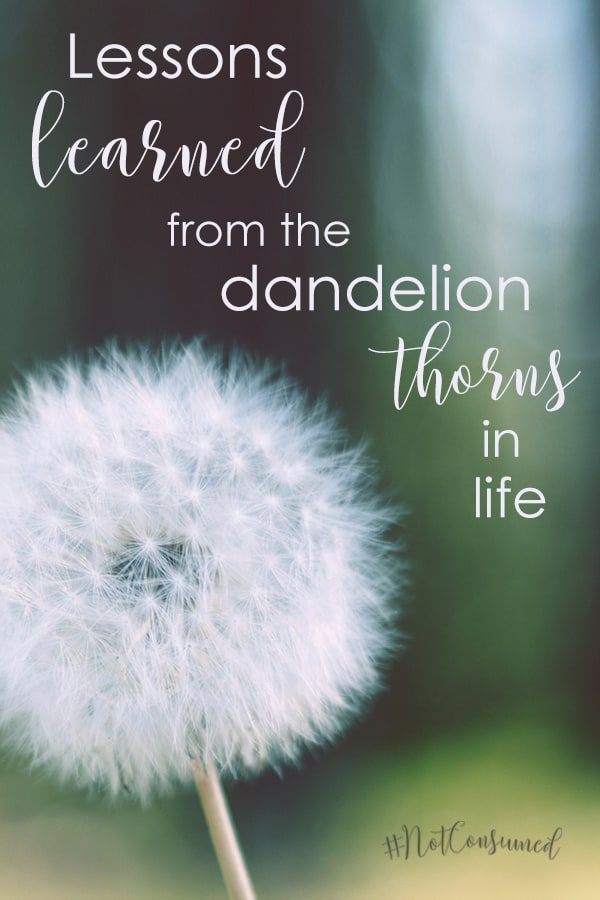 As I watched Luke hold the dandelion that day...I saw a boy who purposed to blow petals of hope and faith on anyone willing to get close enough to share their beauty.